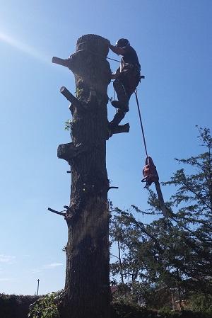 tree surgeon isle of wight